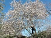 Le printemps arrive à Aiguèze